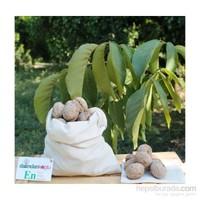 Siirt Doğal Gıda İnce Narin Kabuklu TAZE CEVİZ 1 kg
