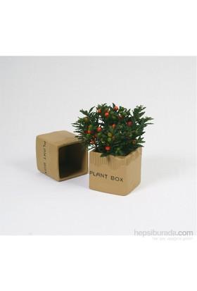 I Love Home Plant Box Saksı Seramik Orta