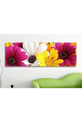 Abella Xxl Boy Dekoratif Kanvas (Canvas) Tablo -120X40 Cm Renkli Papatyalar