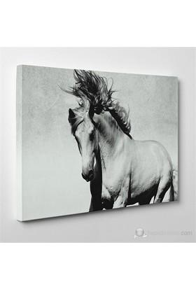 Tabloshop - Siyah Beyaz At Canvas Tablo - 75X50cm