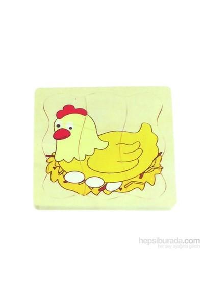 Ekoplay Tavuk Gelişim Evreleri