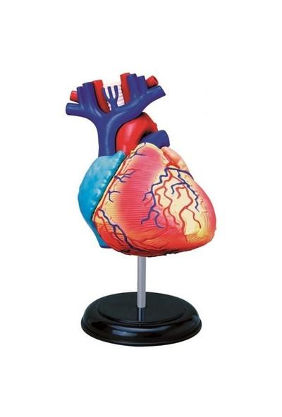 4D Master 4 Boyutlu İnsan Kalbi Puzzle