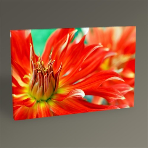 Tablo 360 Zinnia Tablo 45X30