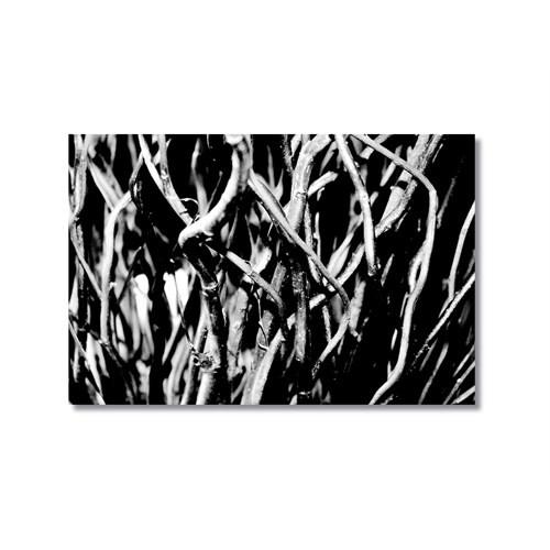 Tictac Siyah Beyaz Dallar Kanvas Tablo - 60X90 Cm