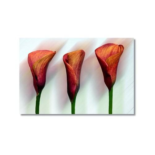 Tictac Kırmızı Çiçekler 2 Kanvas Tablo - 60X90 Cm