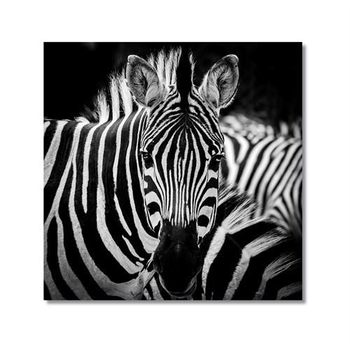 Tictac Zebra 3 Kanvas Tablo - 60X60 Cm