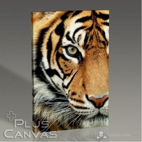 Pluscanvas - Bengal Tiger Tablo