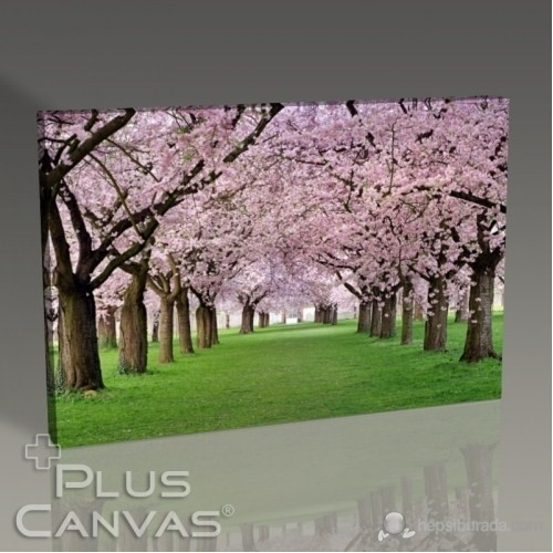 Pluscanvas - Cercis Trees Tablo