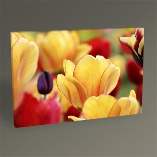 Tablo 360 Tulips Iı Tablo 45X30