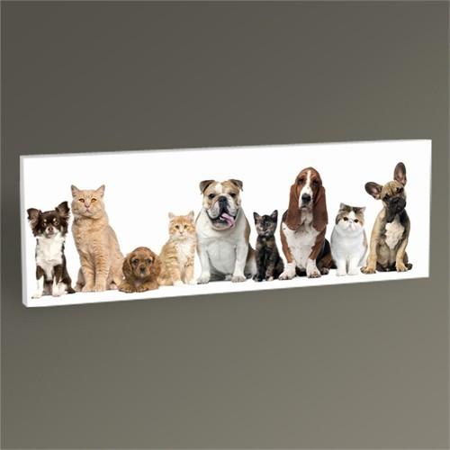 Tablo 360 Kedi Ve Köpekler Tablo 60X20