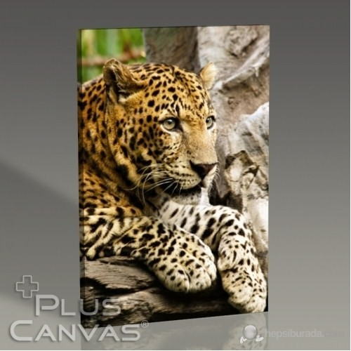 Pluscanvas - Panthera Pardus Tablo