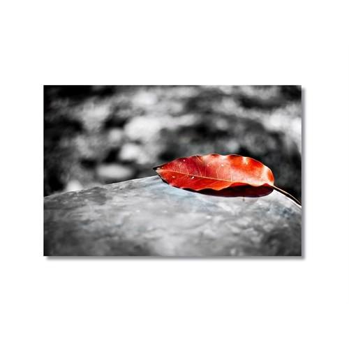 Tictac Kırmızı Yaprak Kanvas Tablo - 40X60 Cm
