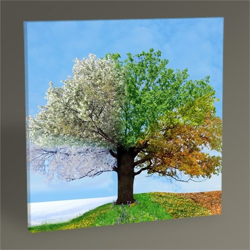Tablo 360 Dört Mevsim Ağaç Iı Tablo 30X30