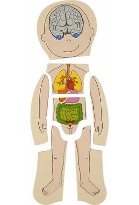 Woody Oyna Öğren Katmanlı Insan Vücudu Ahşap Puzzle 4 x 7 Parça
