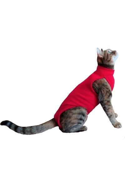 Stylie Kedi Ameliyat Sonrası Giysisi