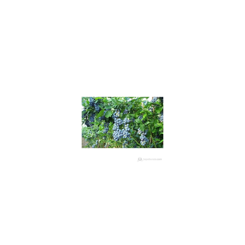 Balsam tohumlarından büyüyoruz 27