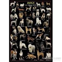 Dogs (1000 Parça)