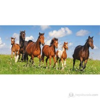 Castorland 4000 Parça Puzzle Paso Fino Herd