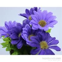 HomeCare 4 lü Saksılı Dekoratif Çiçek 091366