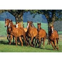 Castorland Puzzle Quarter Horses (1500 Parça)