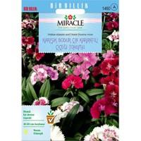 Miracle Tohum Karışık Renkli Bodur Çin Karanfili Çiçeği Tohumu (450 Tohum)