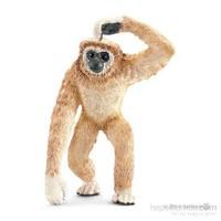Asya Maymunu