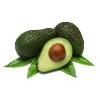 E-Fidancim Bereket Meyvesi Fuerte Avakado Fidanı
