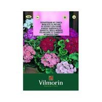 Vilmorin Sardunya Çiçek Tohumu