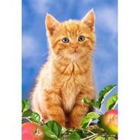 Castorland Çocuk Kitten Witch Apples (60 Parça)