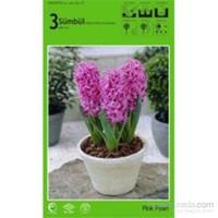 Pink Pearl Sümbül Soğanı Paketli
