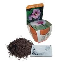 Toprak Saksılı Hatmi Çiçeği Yetiştirme Kiti