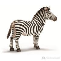 Schleich Zebra, Erkek 14391