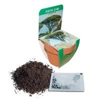 Toprak Saksılı Fıstık Çamı Yetiştirme Kiti