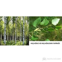 Plantistanbul Betula Pendula- Huş Ağacı 80-100 Cm