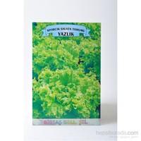 Birtaş Kıvırcık Salata (Yazlık) Tohumu
