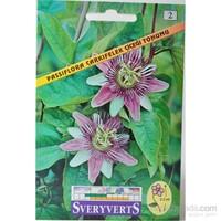 Sveryverts Passıflora Çarkıfelek Çiçek Tohumu
