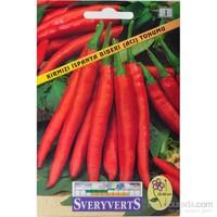 Sveryverts Kırmızı İspanya Biberi (Acı) Tohumu