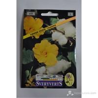 Sveryverts Pamuk Çiçeği Tohumu