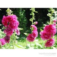Yaprak Çiçek Tohumu Hatmi