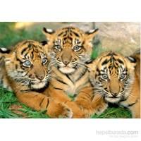 Educa 500 Parça Tiger Cubs Puzzle