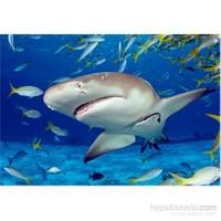 Educa 500 Parçalık Köpekbalığı Puzzle