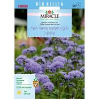 Miracle Tohum Ageratum Mexicanum Mavi Vapur Dumanı Çiçeği Tohumu (1000 Tohum)
