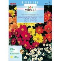 Miracle Tohum Karışık Renkli Bodur Mignon Dahlia Çiçeği Tohumu (80 Tohum)