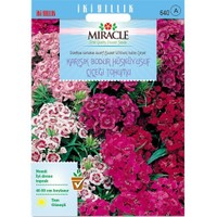 Miracle Tohum Bodur Hüsnüyusuf Çiçeği Tohumu (690 Tohum)
