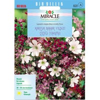 Miracle Tohum Gypsophila Elegance Mixed Bahar Yıldızı Çiçeği Tohumu (1100 Tohum)