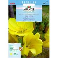 Miracle Tohum Ezan Çiçeği Tohumu(480 Tohum)