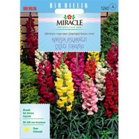 Miracle Tohum Antirrhinum Rainbow Mixed Karışık Aslanağzı Çiçeği Tohumu(3000 Tohum)