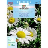 Miracle Tohum Krizantem Kır Papatyası Çiçeği Tohumu (750 Tohum)
