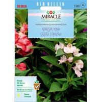Miracle Tohum Balsamina Karışık Renkli Kına Çiçeği Tohumu (150 Tohum)