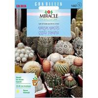 Miracle Tohum Karışık Kaktüs Bitkileri Çiçeği Tohumu (180 Tohum)